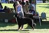 IMG_8773- unkown dog- BOBdogs- 10 08