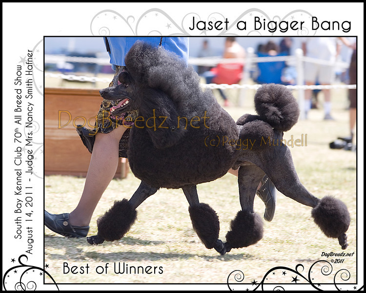 2011 SBKC Sunday - Standard Poodles - DogBreedz