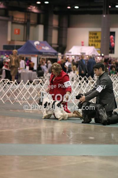 Seattle Kennel Club March 2010