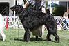 15-18 dog second<br /> Del Sol Pegasus WNS<br /> owner Susan Van de Water