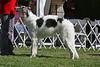 6-9 dog third<br /> Mclintock of Star Canyon<br /> owner Karen Zydner.