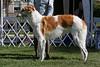 6-9 dog first<br /> Sunbrust Blaze Away<br /> owner Garnett Thompson