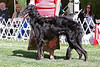 9-12 dog first<br /> Kdlec's High Flyin Playboy<br /> owner Gwen Little