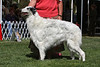 8 - 9 year dog<br /> CH WindNsatin Estacia