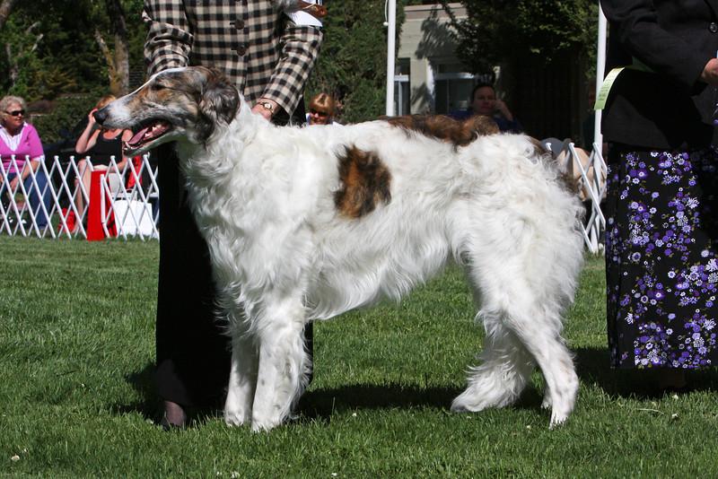 9-12 dog fourth<br />  Bucksilver Dreamcatcher<br /> owner Virginia Graff & Nancy Thurston
