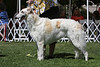 12-15 bitch third<br /> Raynbo's Butterscotch Perfection<br /> owners Roni & Jennifer Zucker