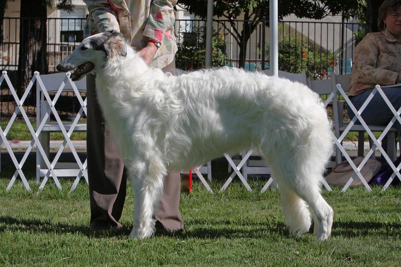 6-9 dog second<br /> Ravenna Supersymmetry<br /> owner Susan Caulkins & Carly Dumaine