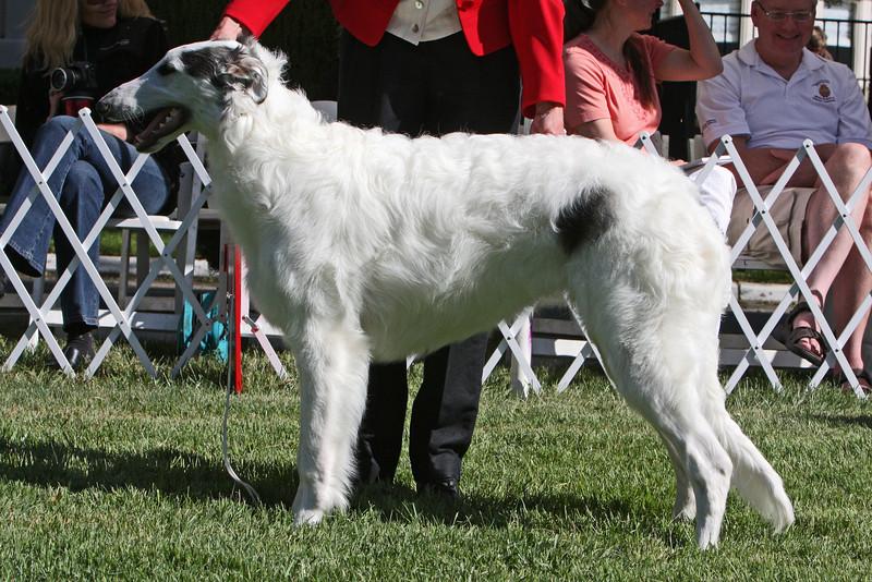 6-9 dog fourth<br /> Belarus Defy The Normal<br /> owner Crista Cordtz