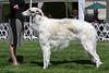 15-18 dog fourth<br /> Jubilee tad Bit O Brindle Mist<br /> owners Cynthia & Amelia Gredys
