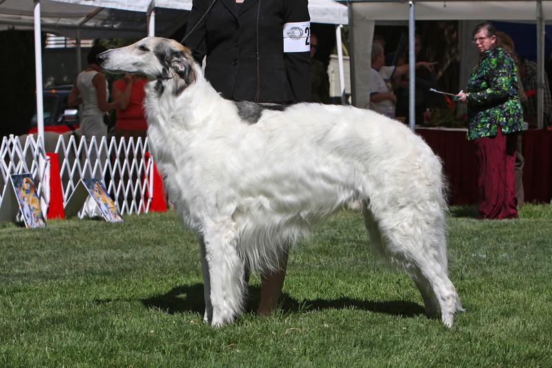 7 - 8 year dog<br /> CH Jubilee Breath Of Life CD