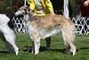 12-15 dog third<br /> Bistroi Valeska Intrepid<br /> owner Carol Hannon