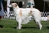 15-18 dog third<br /> Aruzia Priority One<br /> owners John & Lorrie Scott