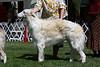 12-15 dog second<br /> Majenkir Rngmaster at Raynbo<br /> owners Roni & Jennifer Zucker & Karen Cartabona