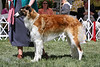 9-12 bitch first<br /> Best in Sweepstakes<br /> Sohounds Crystal Ball<br /> owner Sara Ose