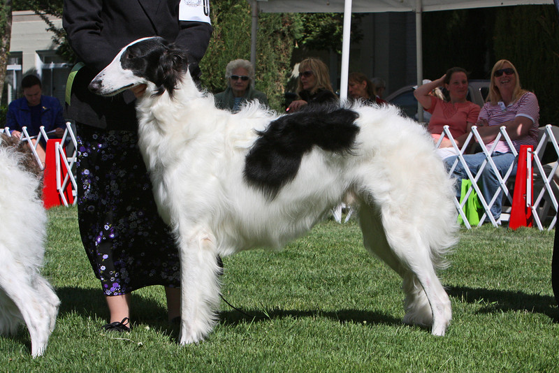 9-12 dog third<br /> Skyline Black Tie Affair O'Rey<br /> owner Kay Novotny