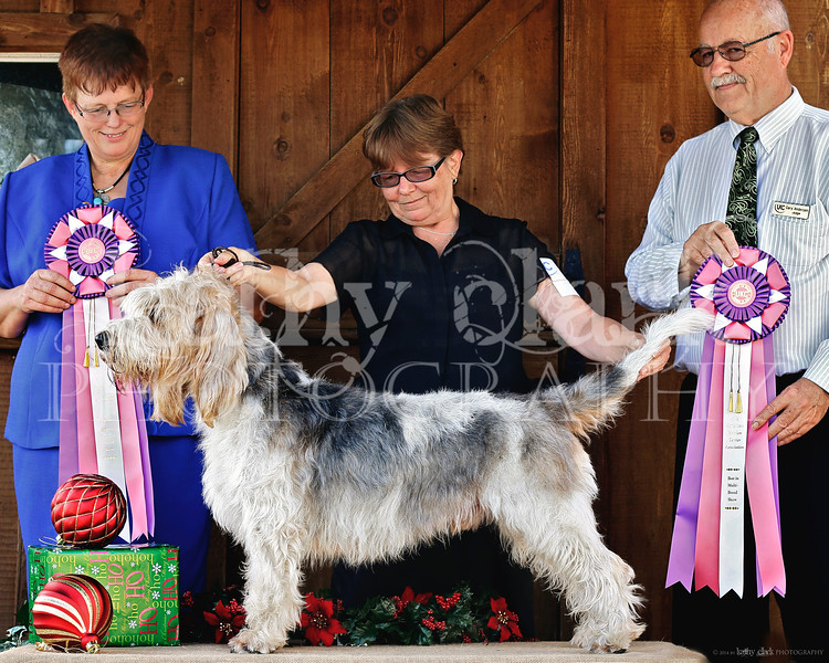 Louis Stevens Best in Show both shows!