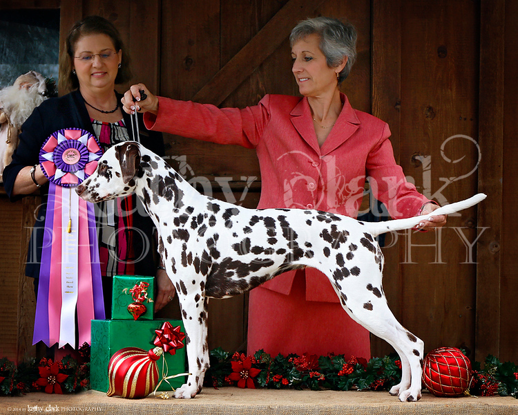 Ellie Best in Show
