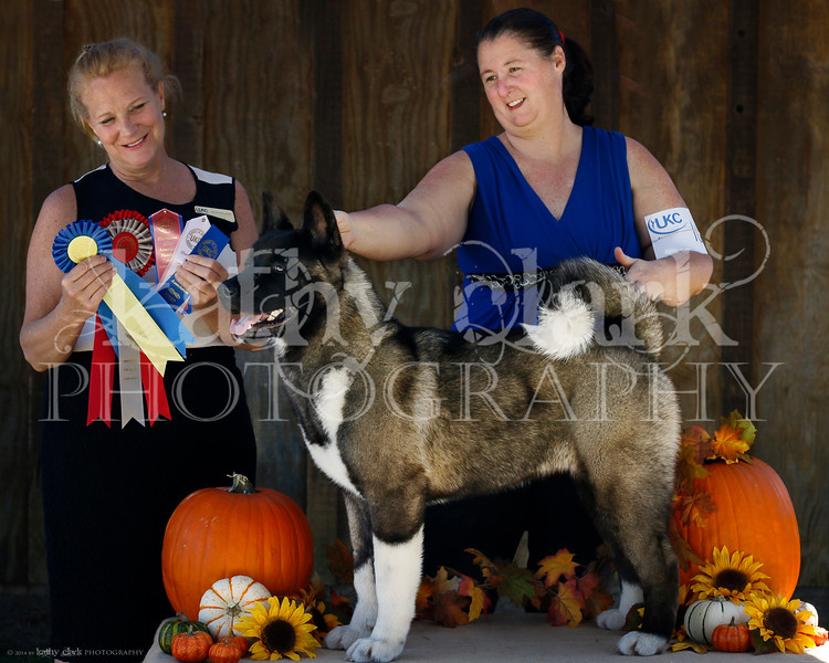 Best of Breed Group Two