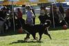 IMG_8778- unkown dog- BOBdogs- 10 08