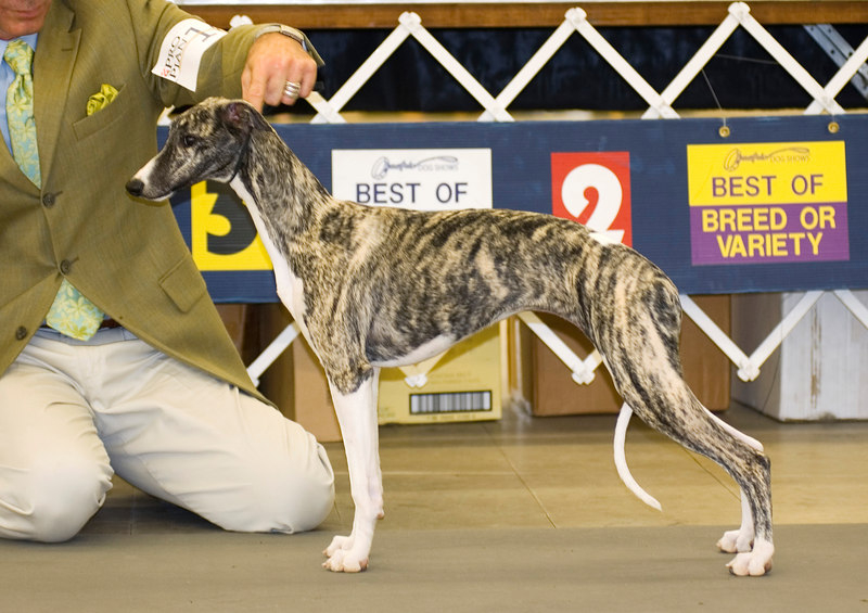 Tripletime Nightingale - 2nd - 6 to 9 months Puppy Bitch
