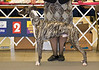 Raybar's Red October - 1st Bred By Exhibitor Dog