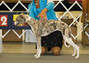 Anndra's Kachina Woman of the Year - 1st - 6 to 9 months Puppy Bitch
