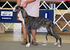 Tattershall So My Halo's Crooked - 1st - Bred By Exhibitor Bitch, Winners Bitch