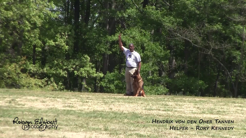 Montell Brown and Hendrix von den Oher Tannen - Protection 72 (2014 GSDCA-WDA National IPO & FH Championship)
