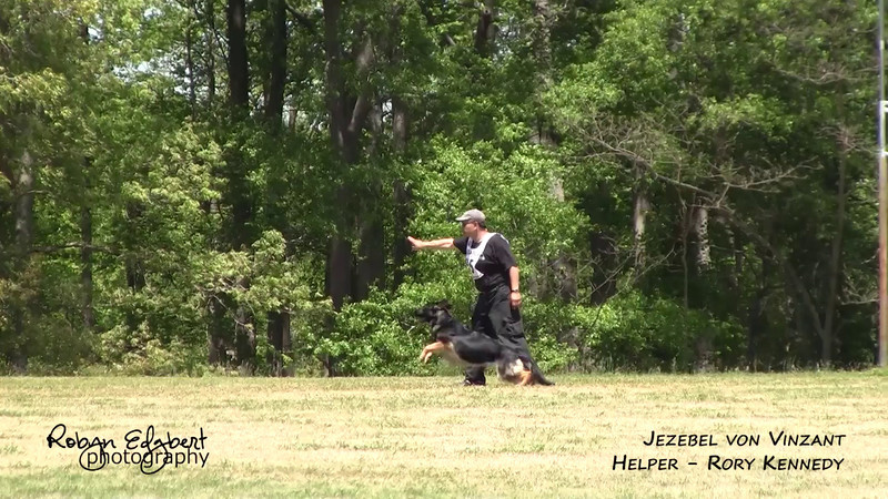 Herman Vargas and Jezebel von Vinzant - Protection (2014 GSDCA-WDA National IPO & FH Championship)