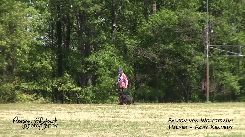 Monica Patty and Falcon von Wolfstraum - Protection 84 (2014 GSDCA-WDA National IPO & FH Championship)