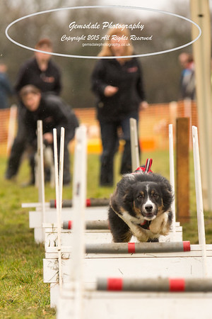 Jets Flyball Competition-106