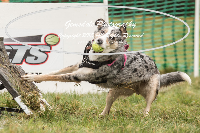 Jets Flyball Competition-21
