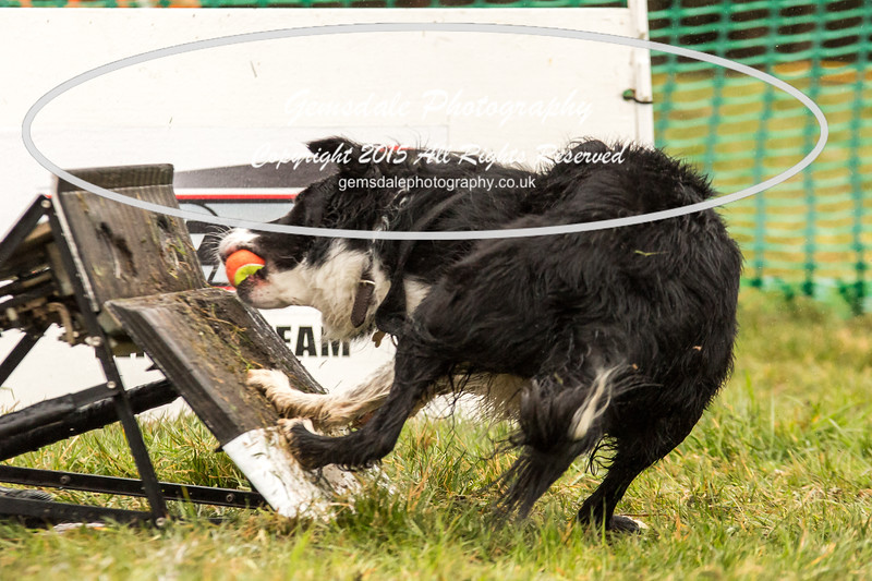 Jets Flyball Competition-18