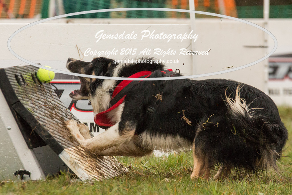 Jets Flyball Competition-16