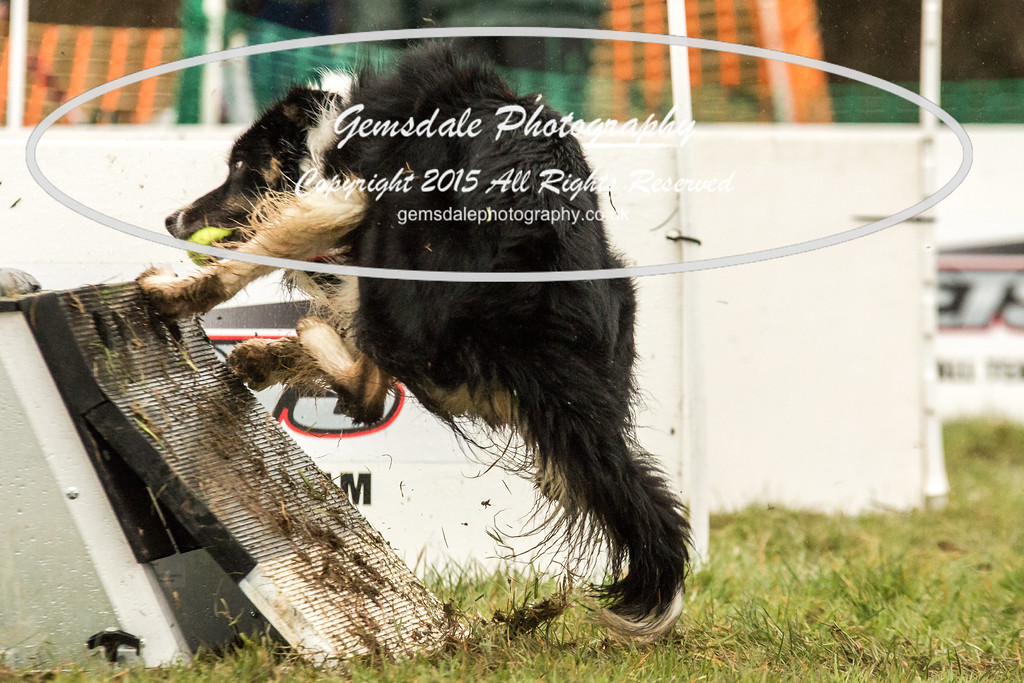 Jets Flyball Competition-17