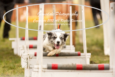 Jets Flyball Competition-105