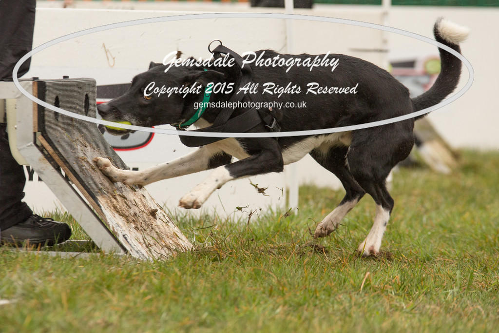 Jets Flyball Competition