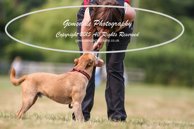 Bridgehouse Agility Club -1008