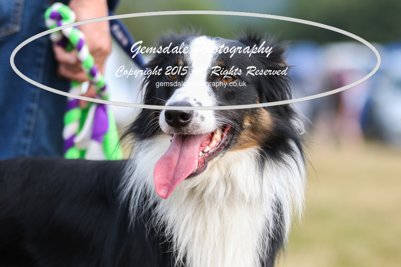 Bridgehouse Agility Club -1003