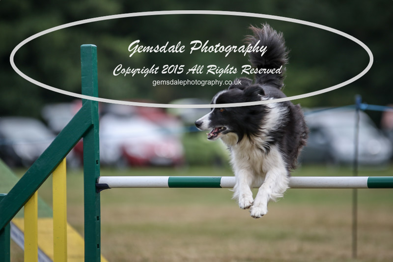 Bridgehouse Agility Club -2016