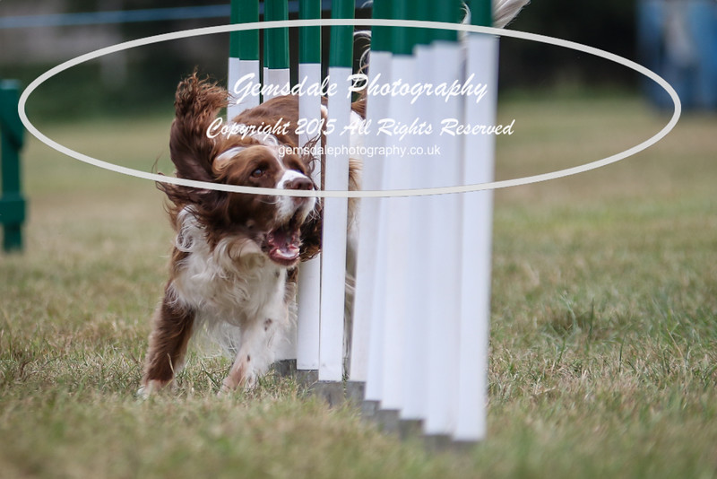 Bridgehouse Agility Club -2019