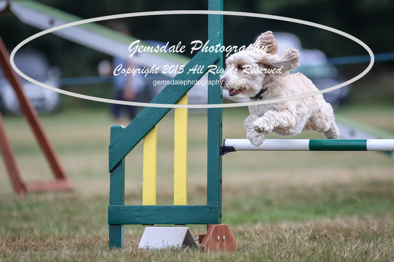 Bridgehouse Agility Club -2044