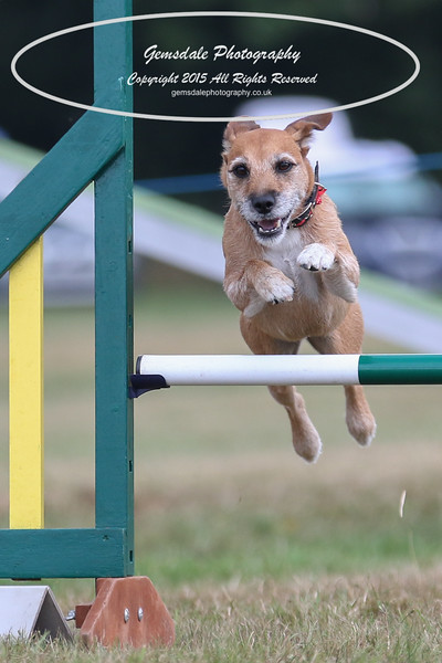 Bridgehouse Agility Club -2047