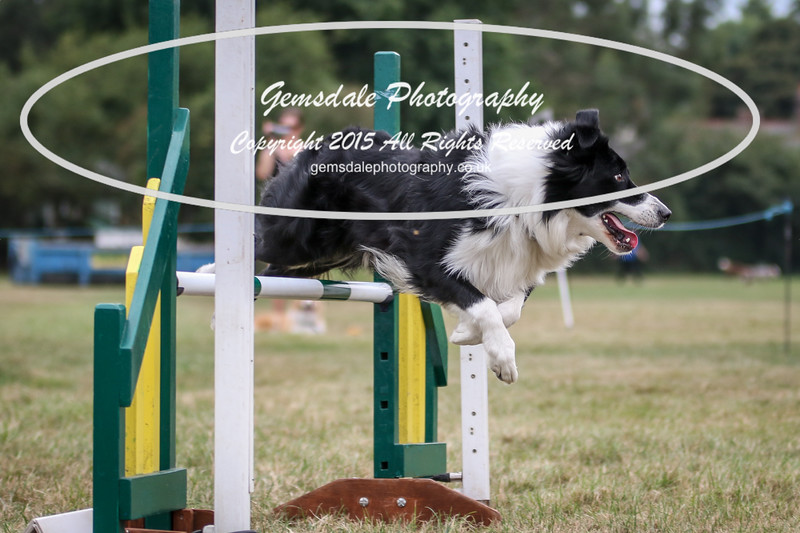 Bridgehouse Agility Club -2028