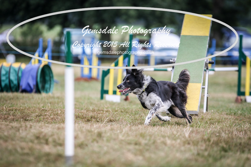 Bridgehouse Agility Club -2005