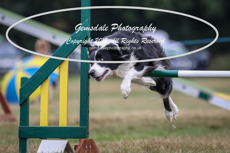 Bridgehouse Agility Club -2024