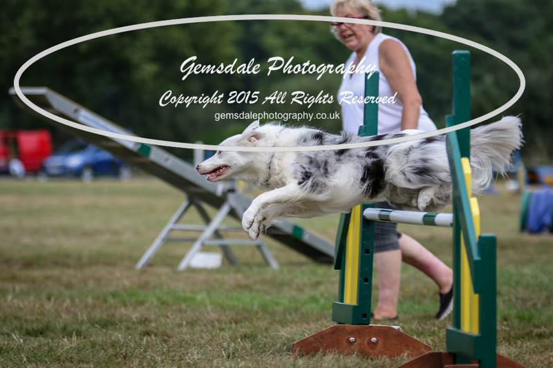Bridgehouse Agility Club -2000