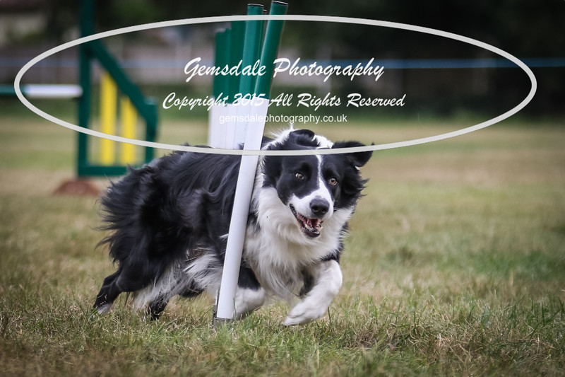 Bridgehouse Agility Club -2026