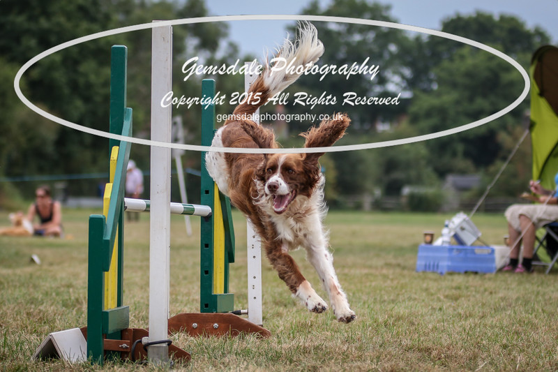 Bridgehouse Agility Club -2021