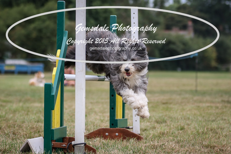 Bridgehouse Agility Club -2023